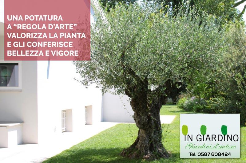 Potatura e abbattimento di piante e alberi da giardino e condominiali - Piante da giardino alto fusto ...
